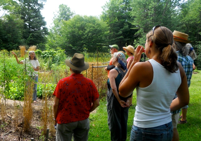 Sylvia explaining self-pollination vs cross-pollination